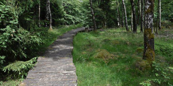 Holzbohlenweg im Wald