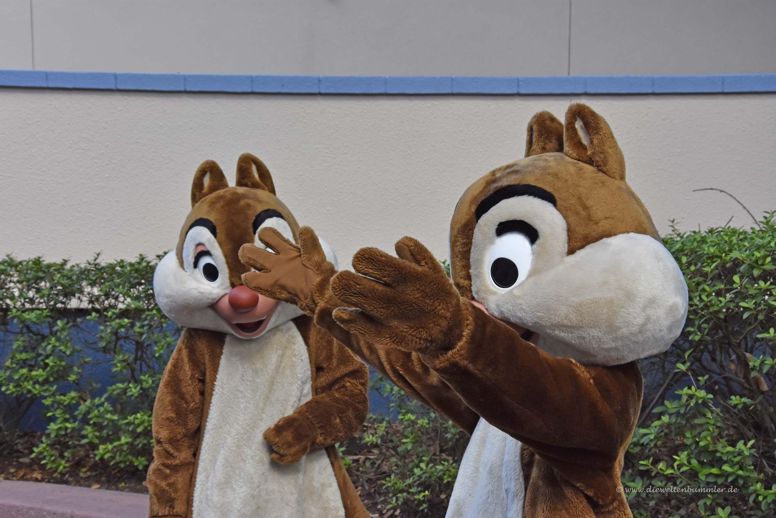 A- und B-Hörnchen