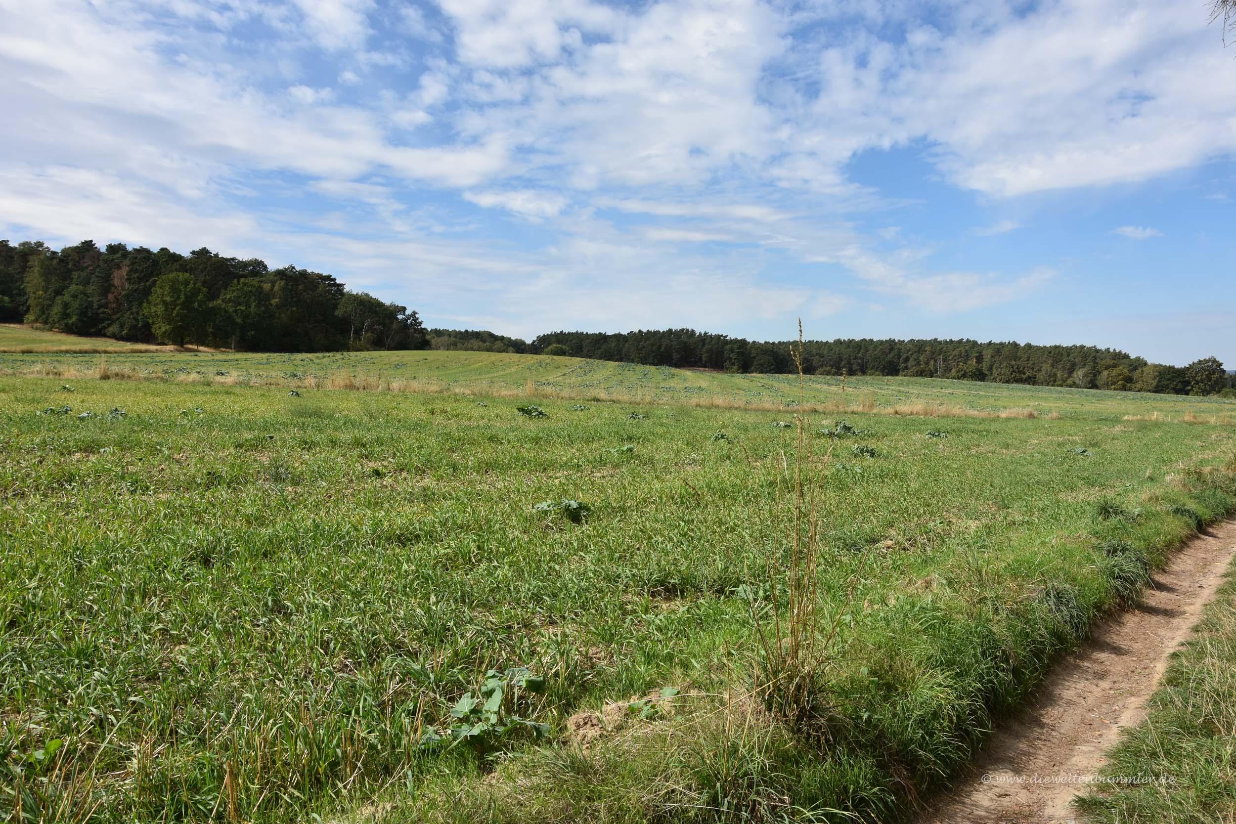 Feldweg zum Kutschenberg