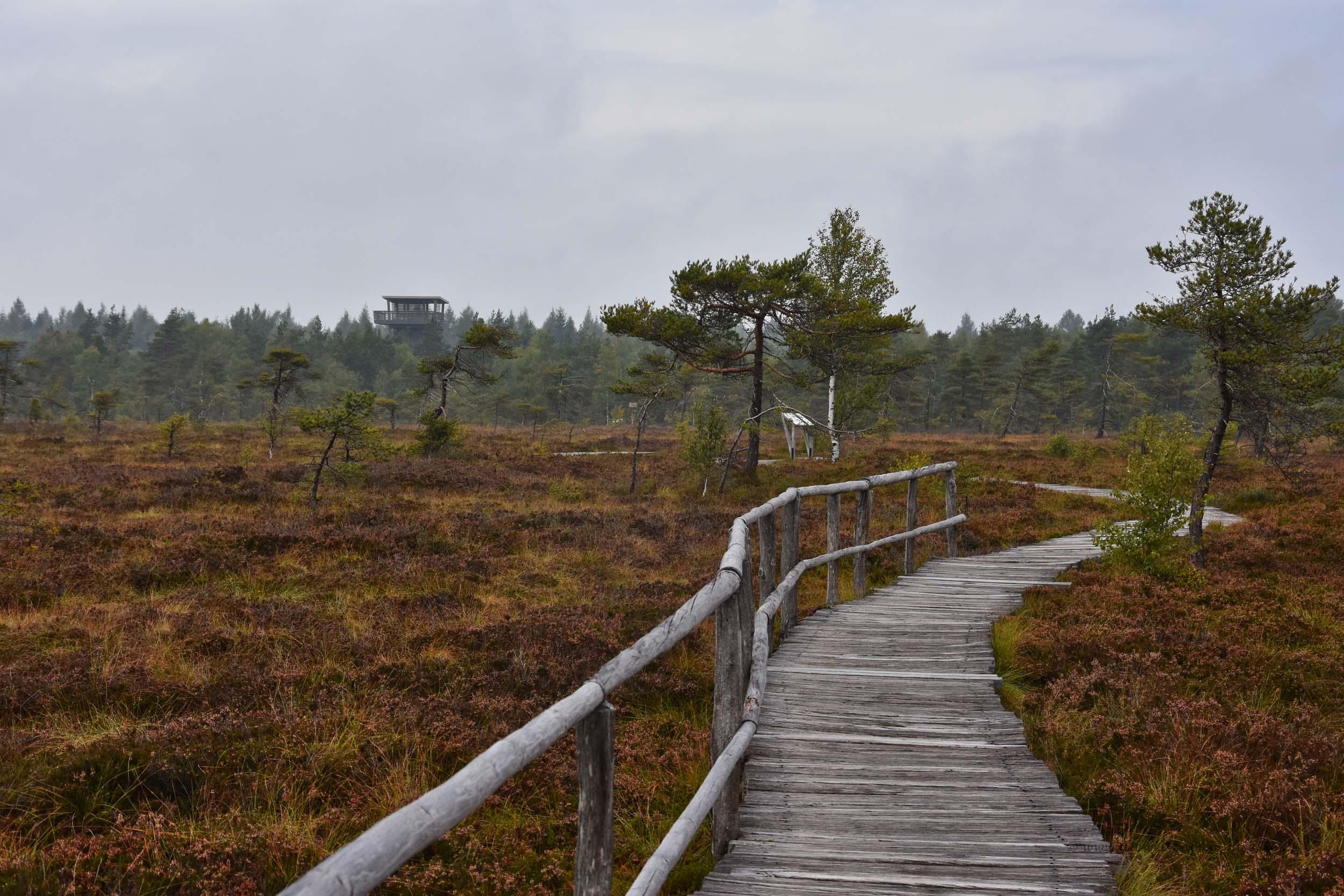 Holzbohlenpfad