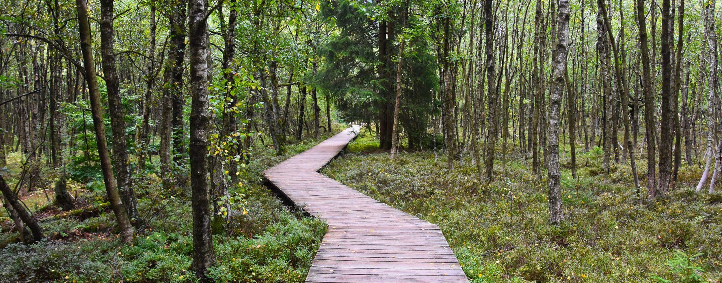 Holzbohlenweg durch das Rote Moor