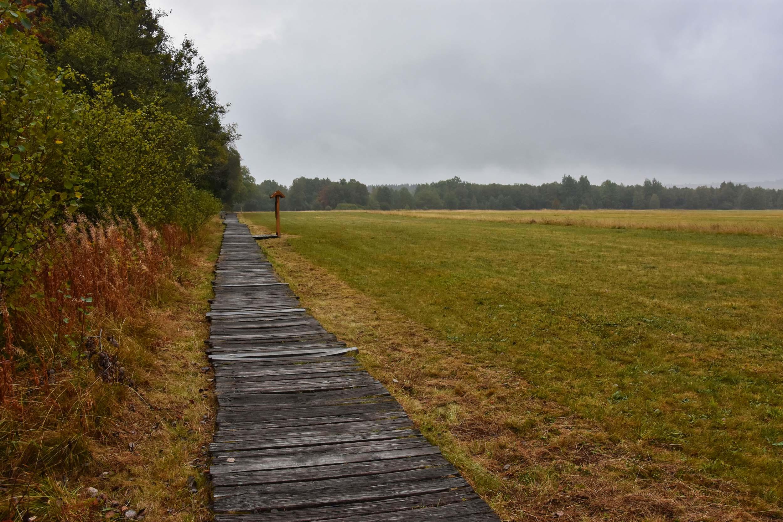 Holzsteg im Schwarzen Moor