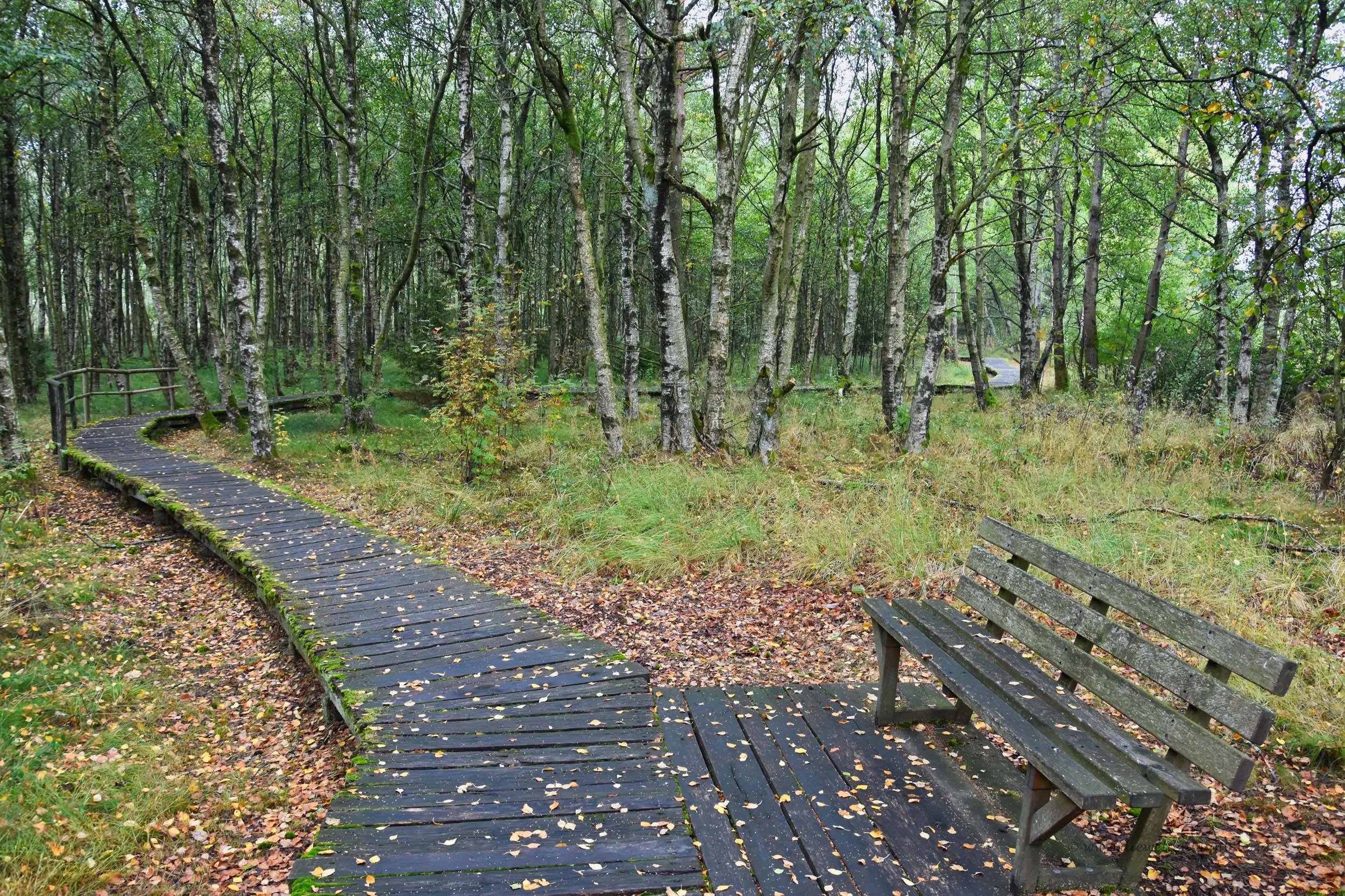 Holzwanderweg mit Sitzbank