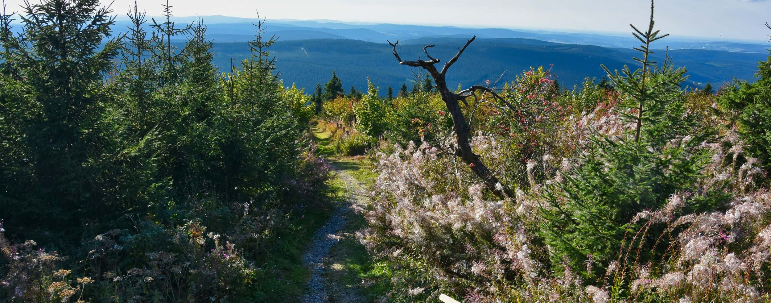 Wanderweg am Fichtelberg