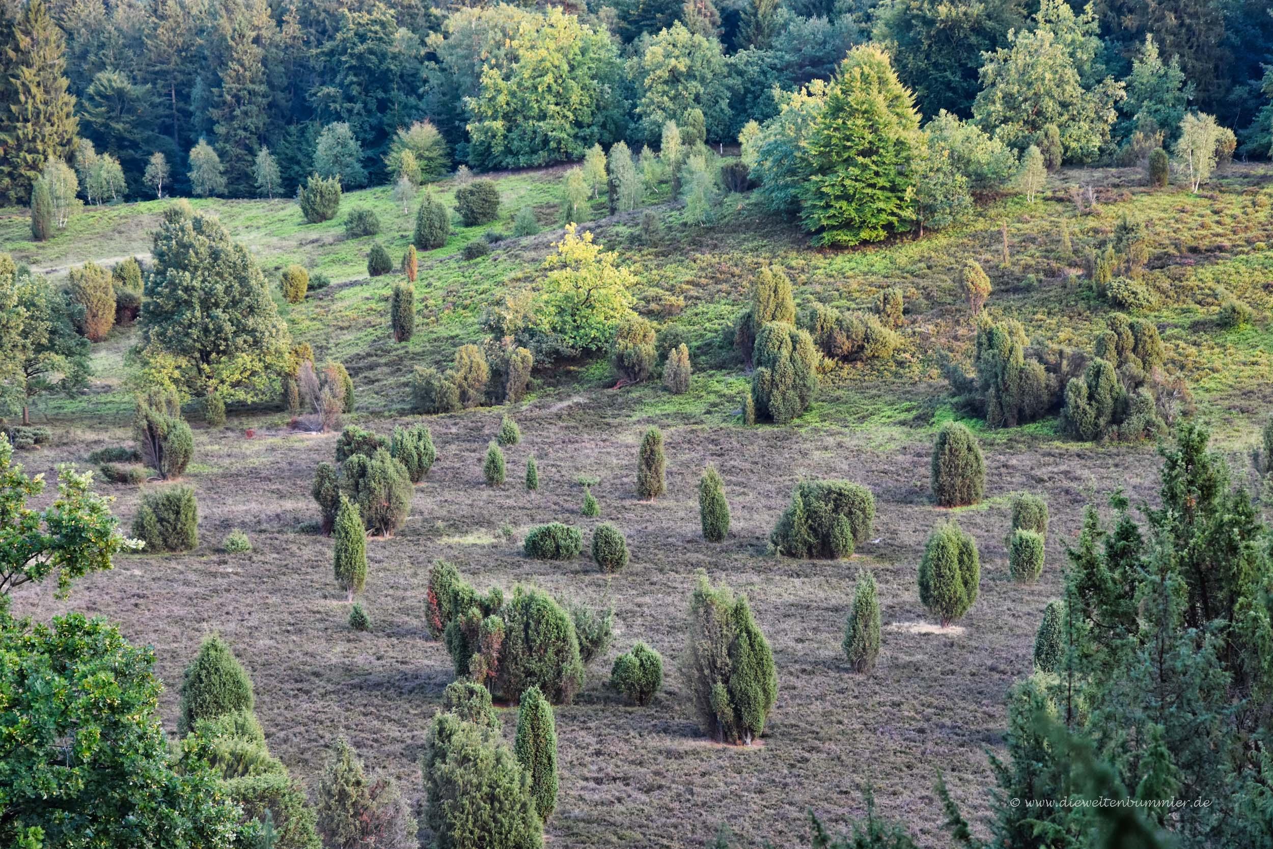 Heidefläche am Totengrund