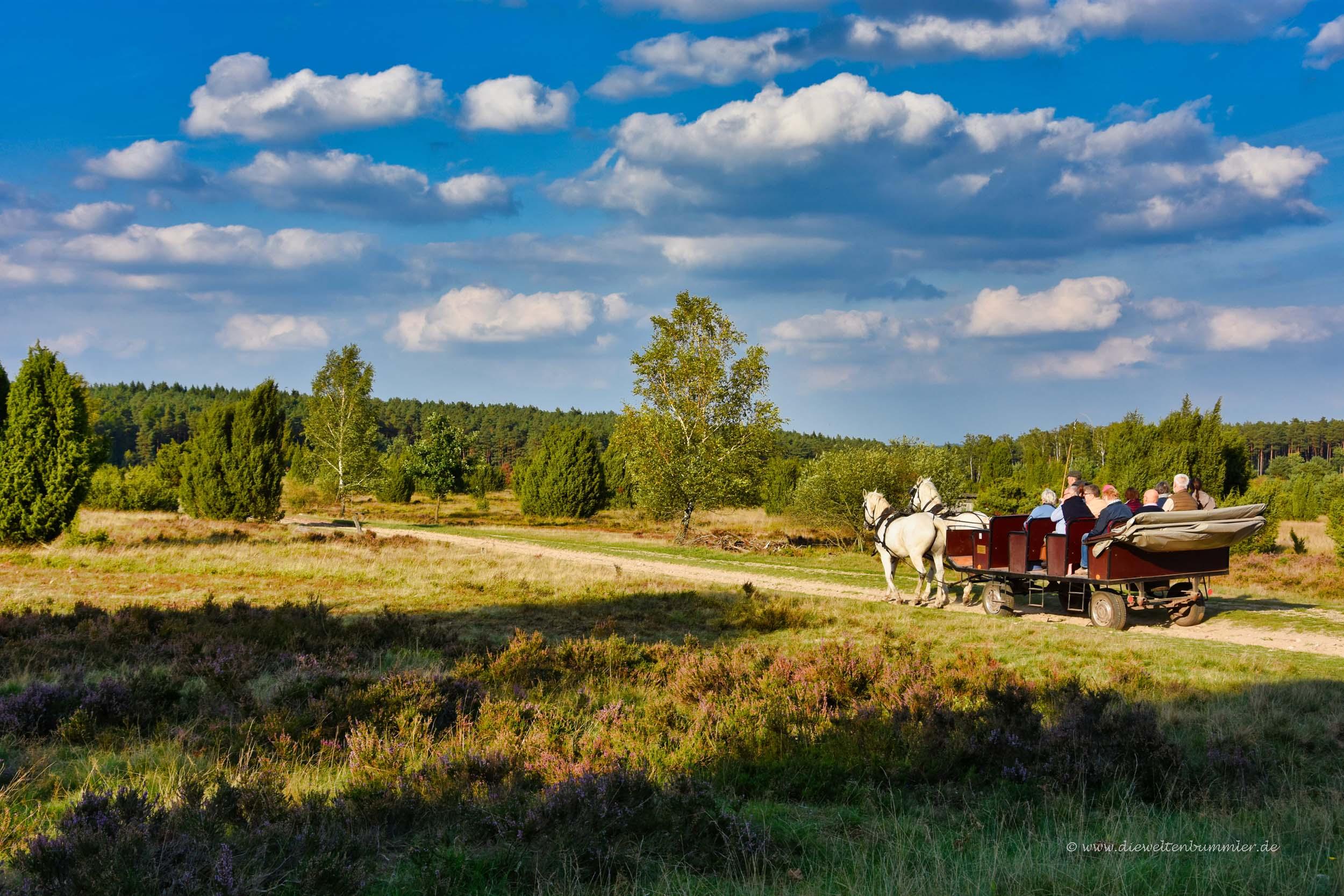 Mit der Kutsche durch die Lüneburger Heide