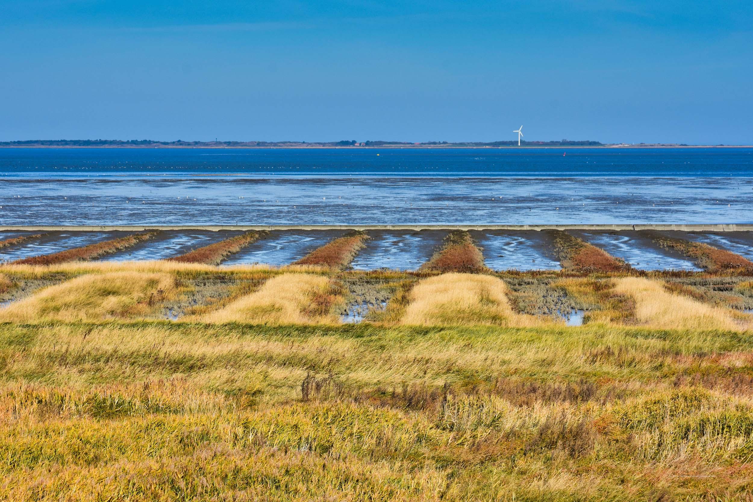 Salzwiesen und im Hintergrund Spiekeroog