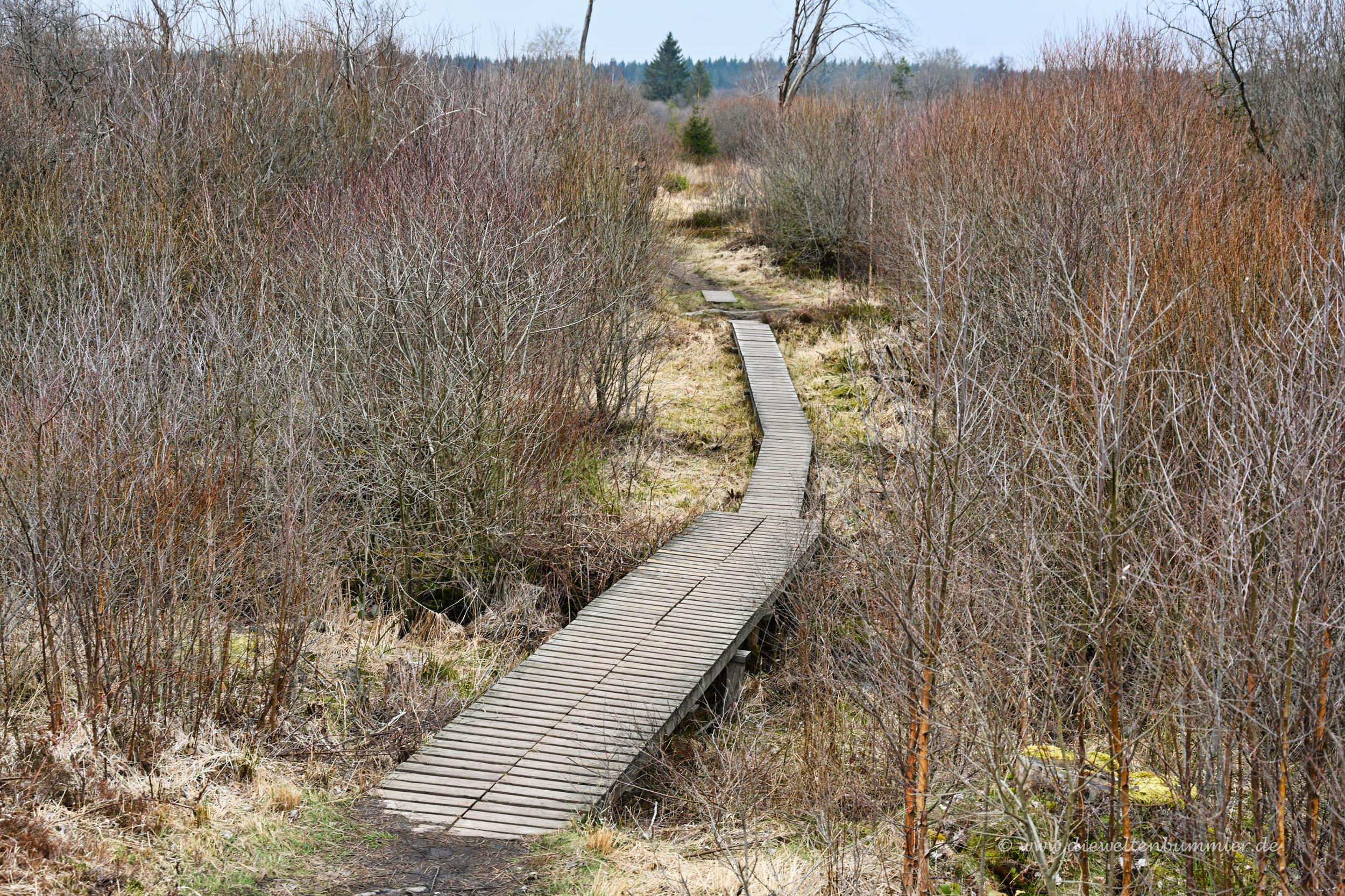 Holzbohlenweg im Venn