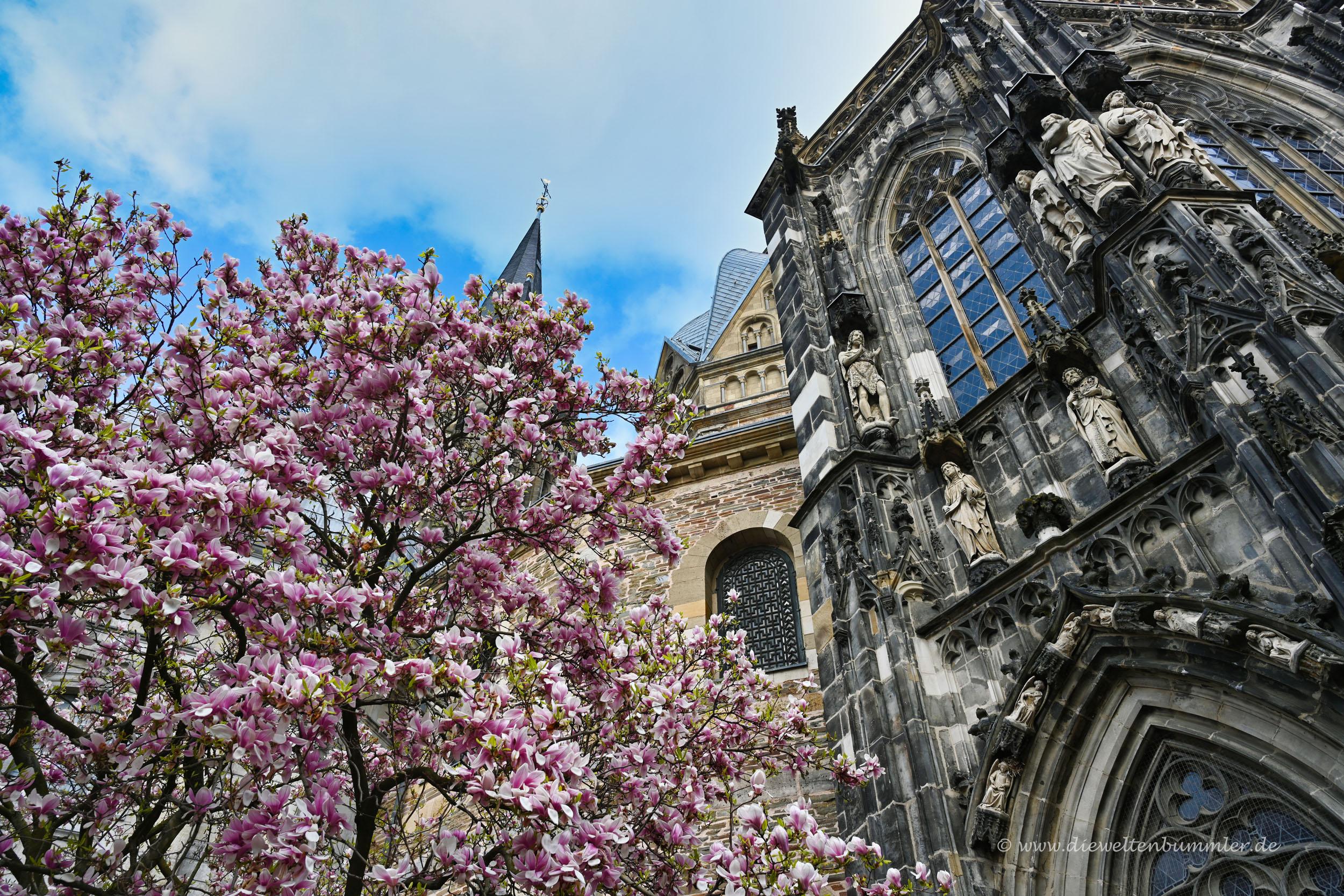Magnolie vor dem Aachener Dom