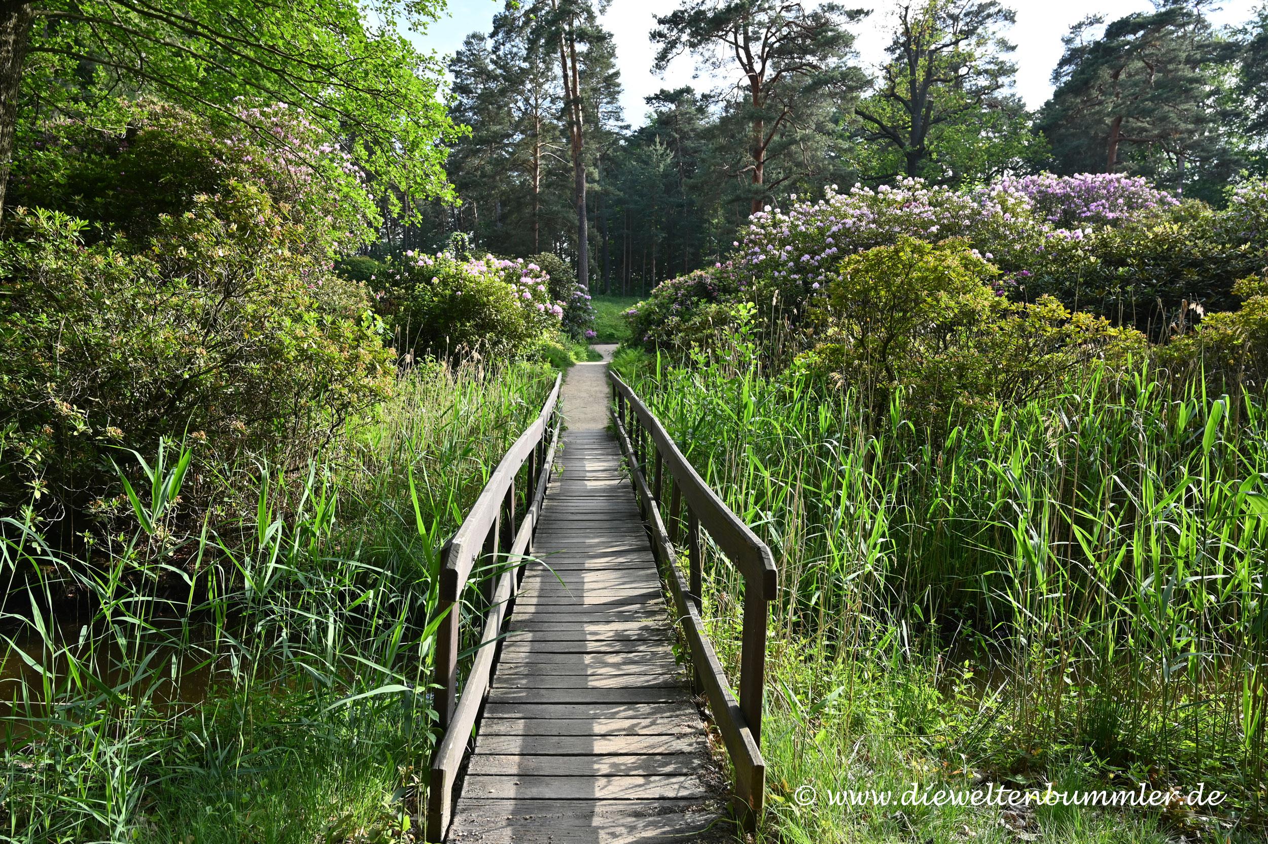 Brücke im Rhododendron-Tal
