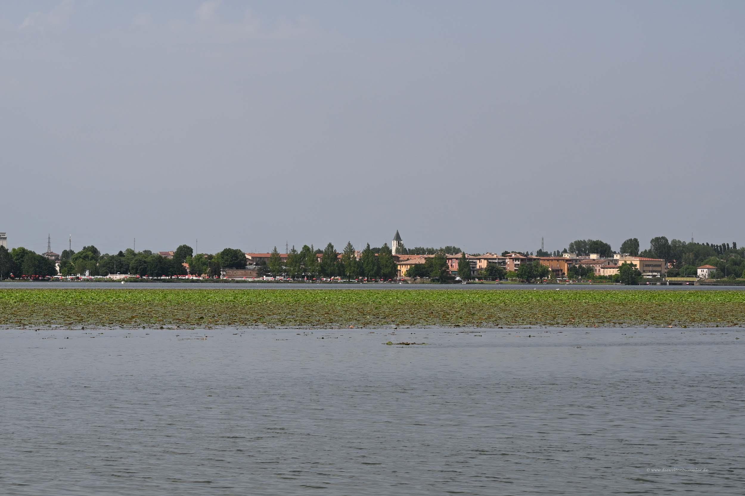 Lotospflanzen in Mantua
