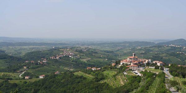 Slowenische Weinlandschaft