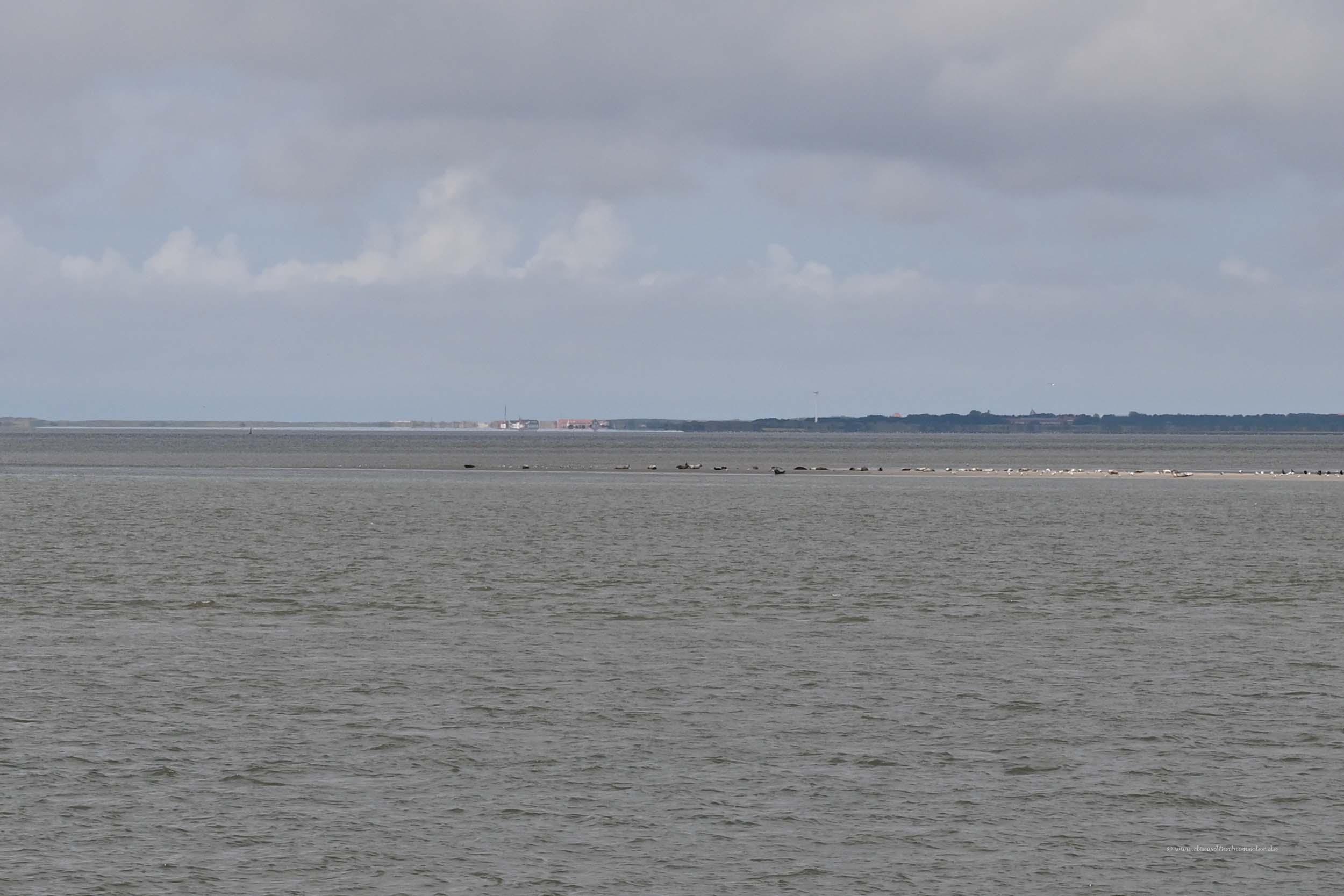 Seehundbänke vor Wangerooge