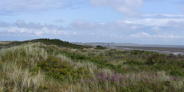 Wangerooges Landschaft