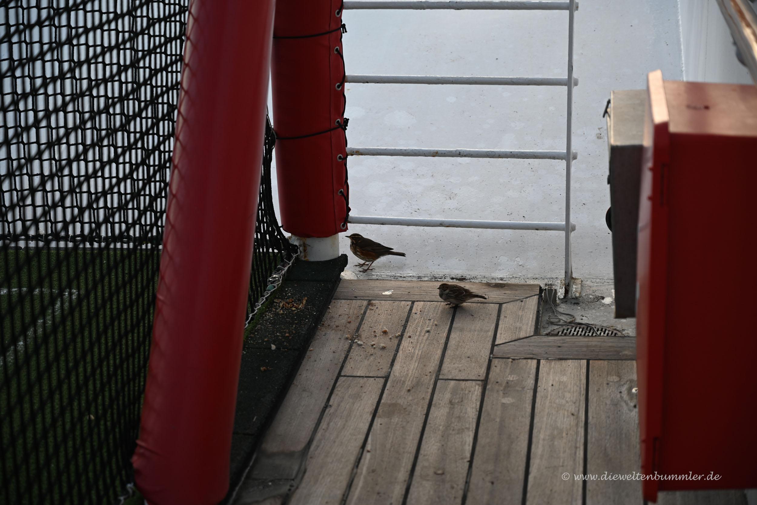 Vögel sind mit an Bord