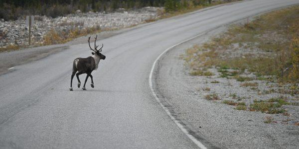 Rentier in Kanada