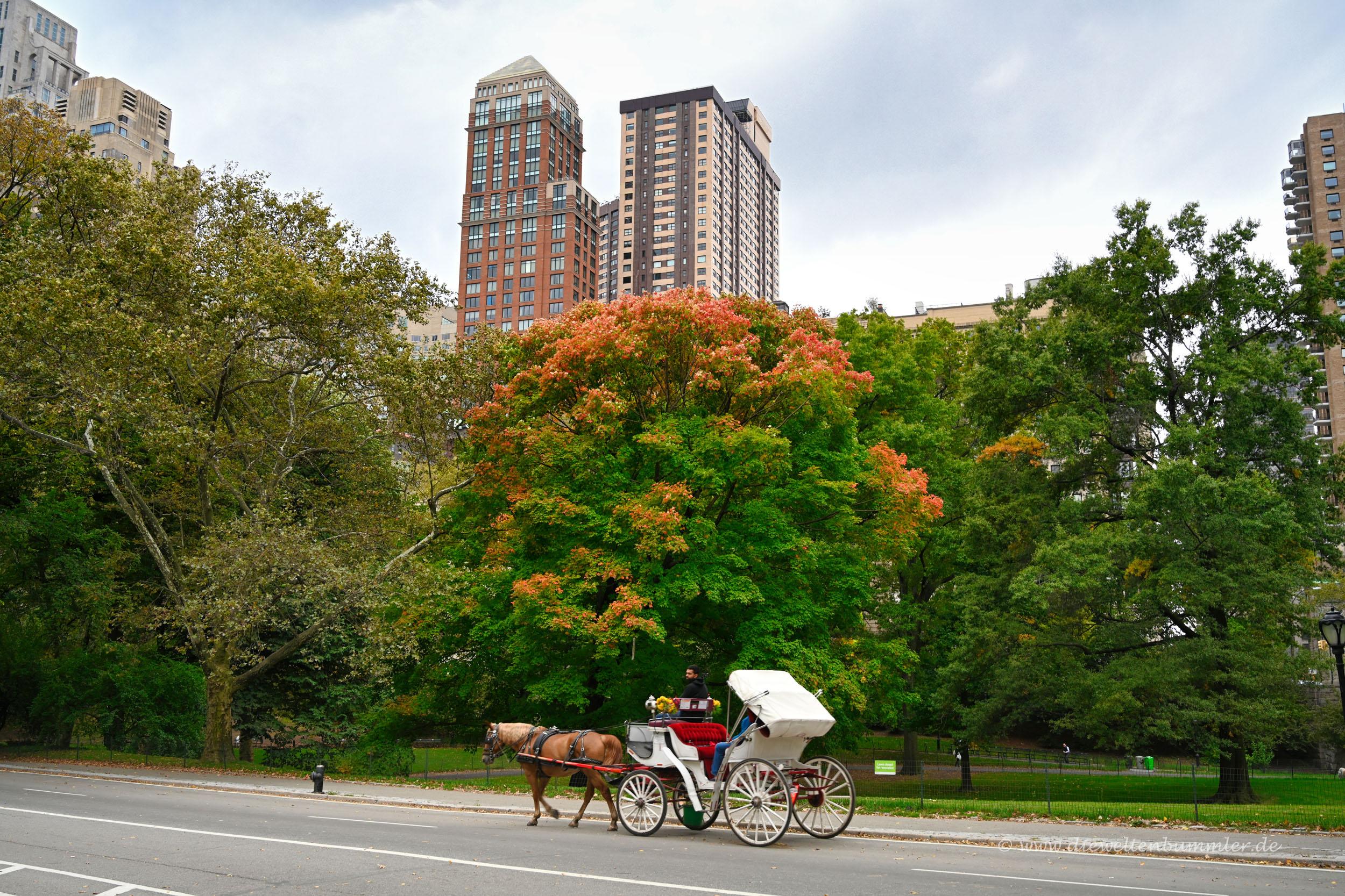 Kutsche im Central Park
