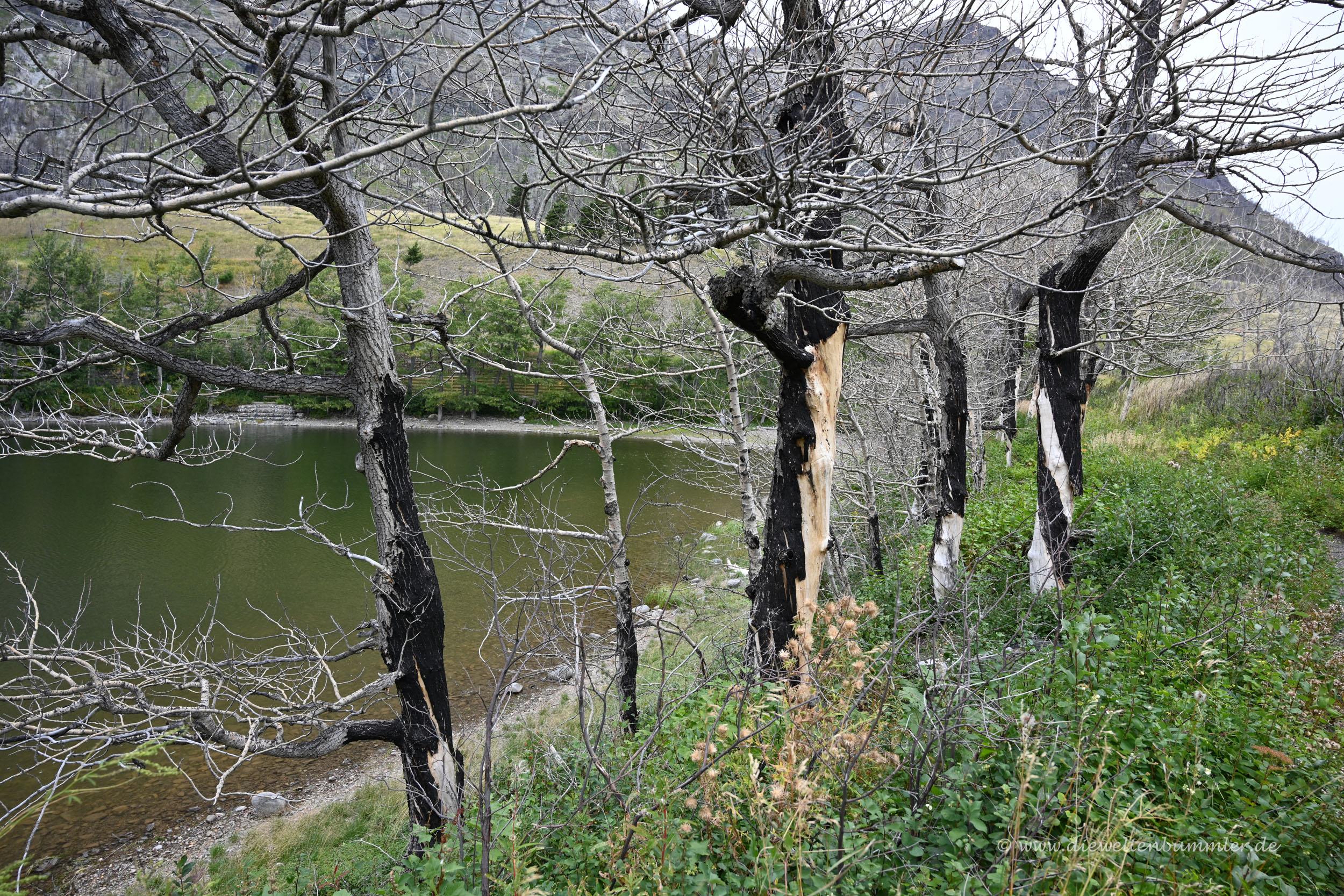 Schäden durch Waldbrände