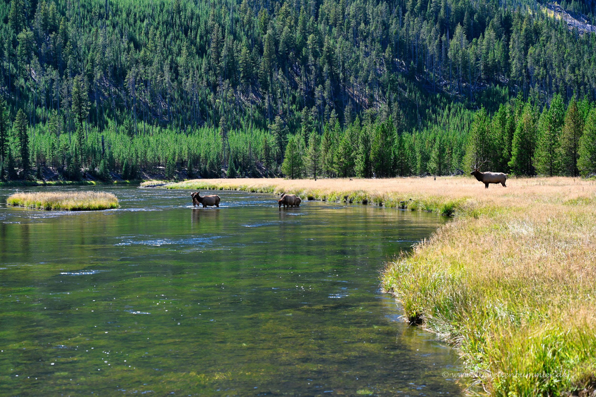 Unterwegs im Yellowstone Nationalpark