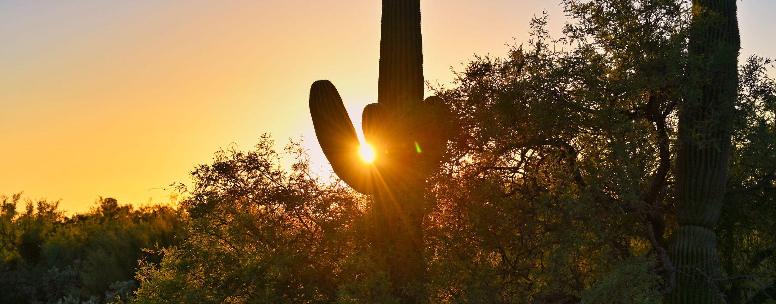 Kaktus mit Sonnenuntergang