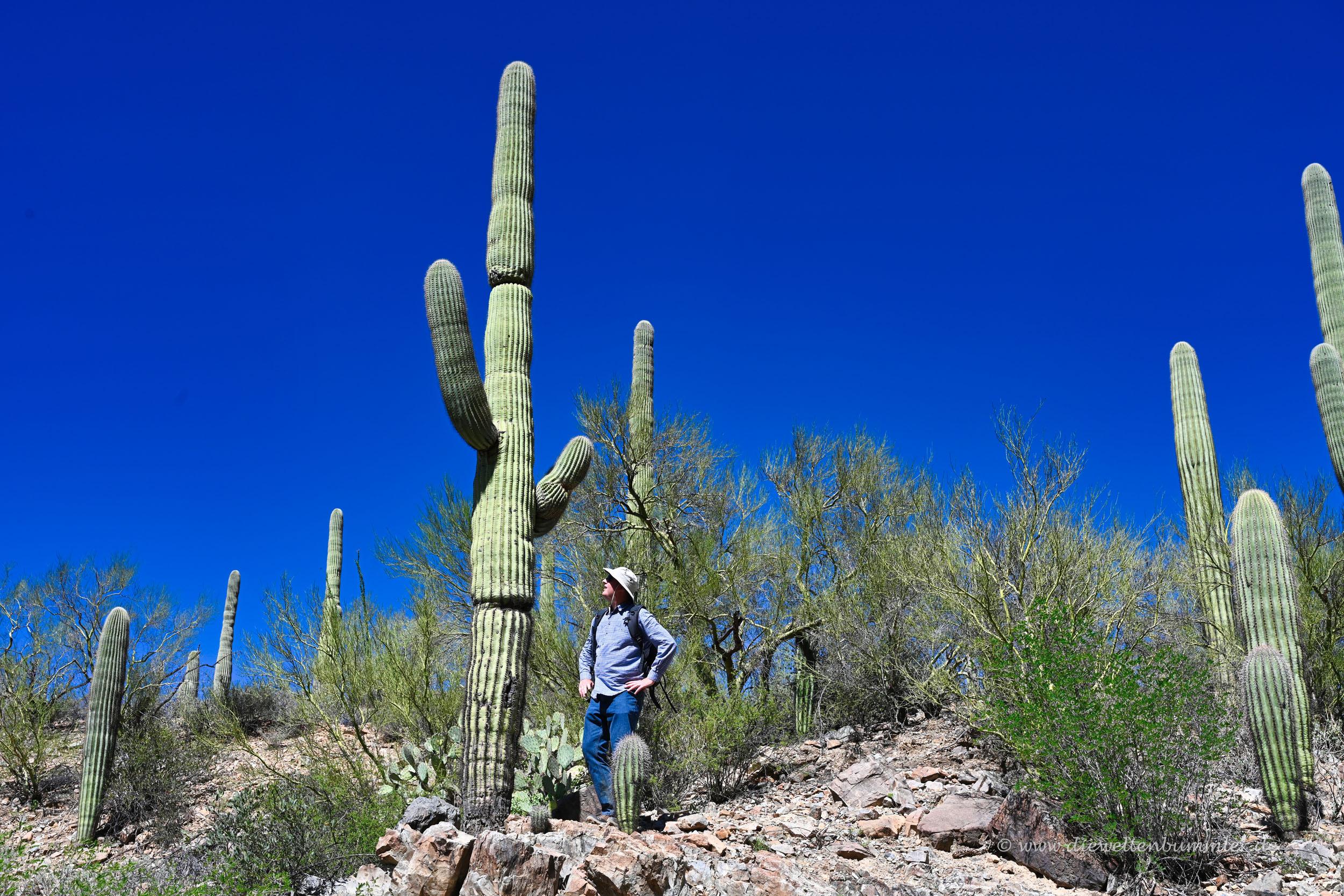 Michael Moll mit Kaktus