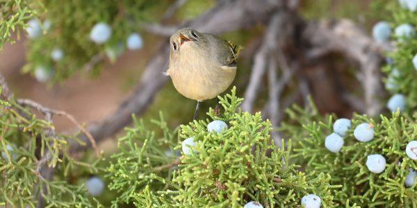 Niedlicher Vogel