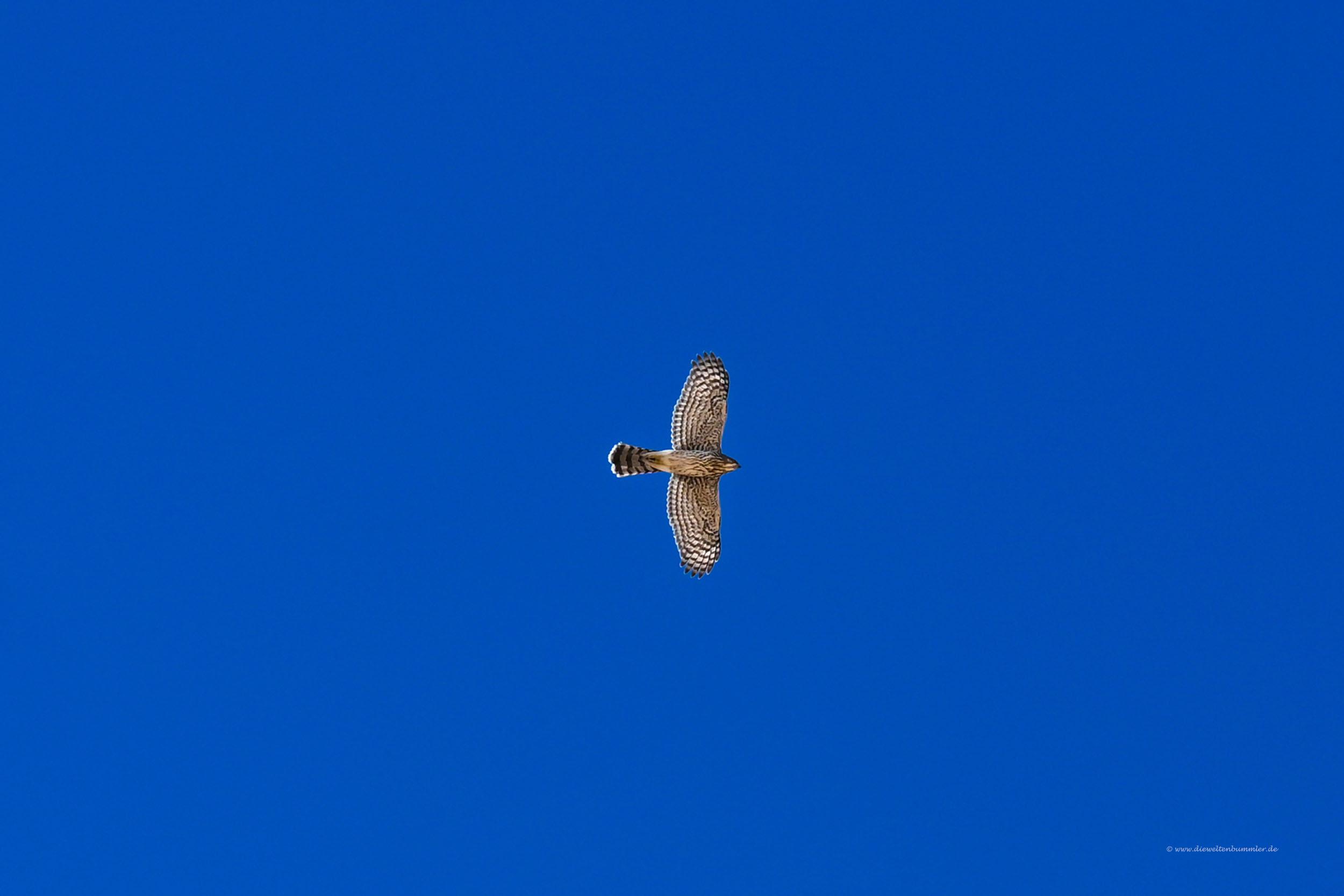 Greifvogel über der Wüste