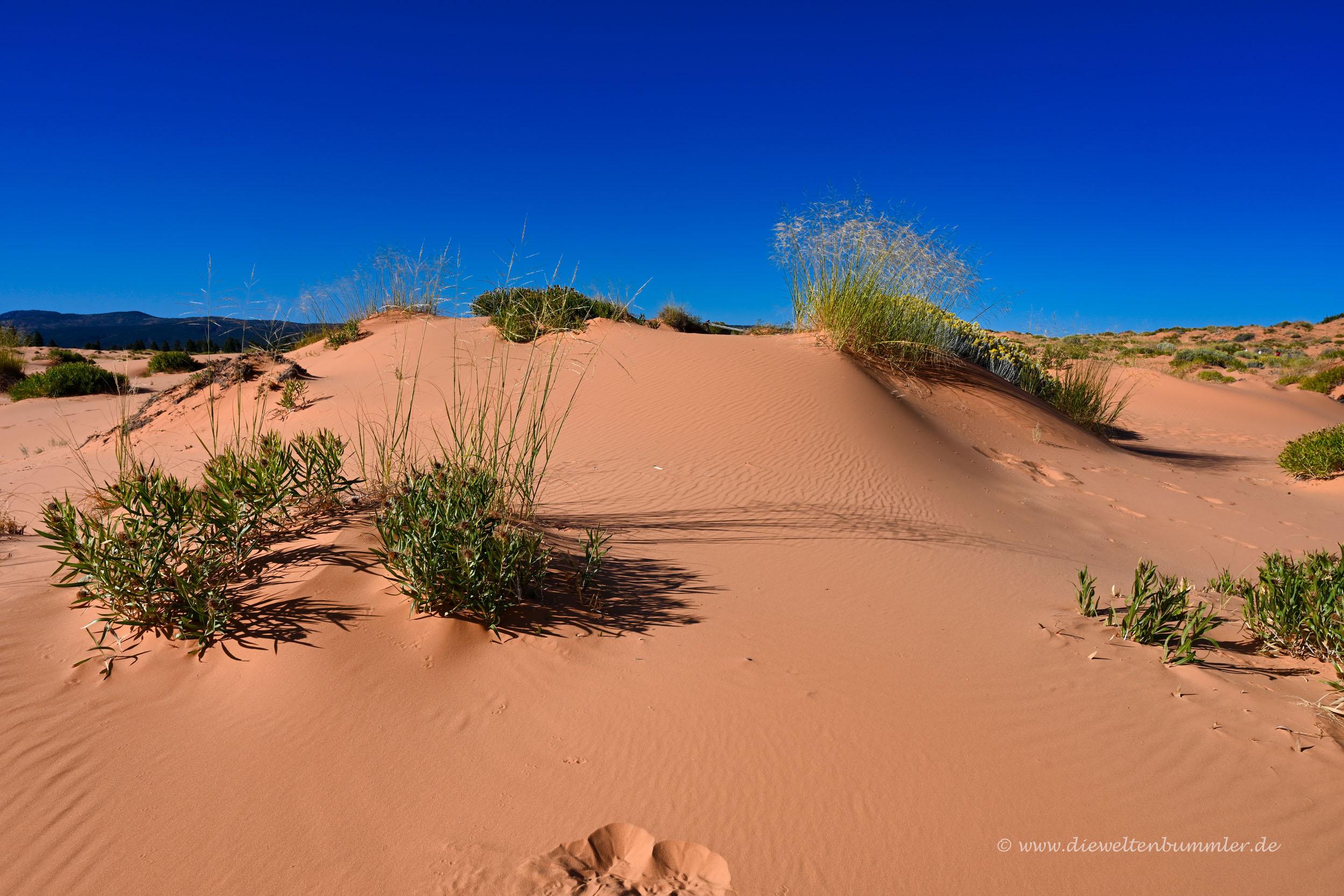 Sanddünen bei Kanab