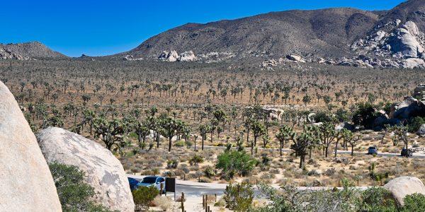 Wüste mit Joshua Trees