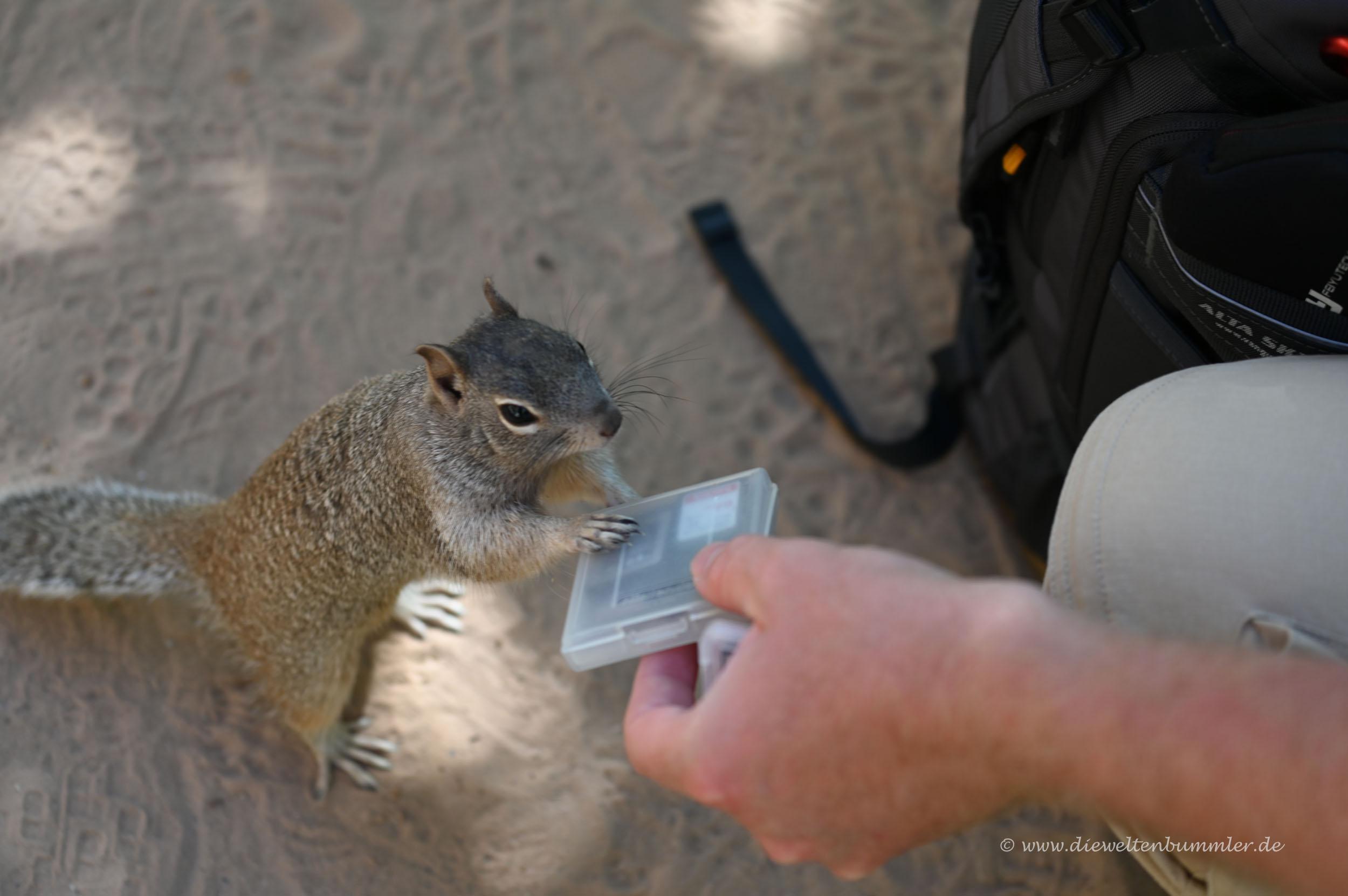 Squirrel hilft beim Speicherkartenwechsel