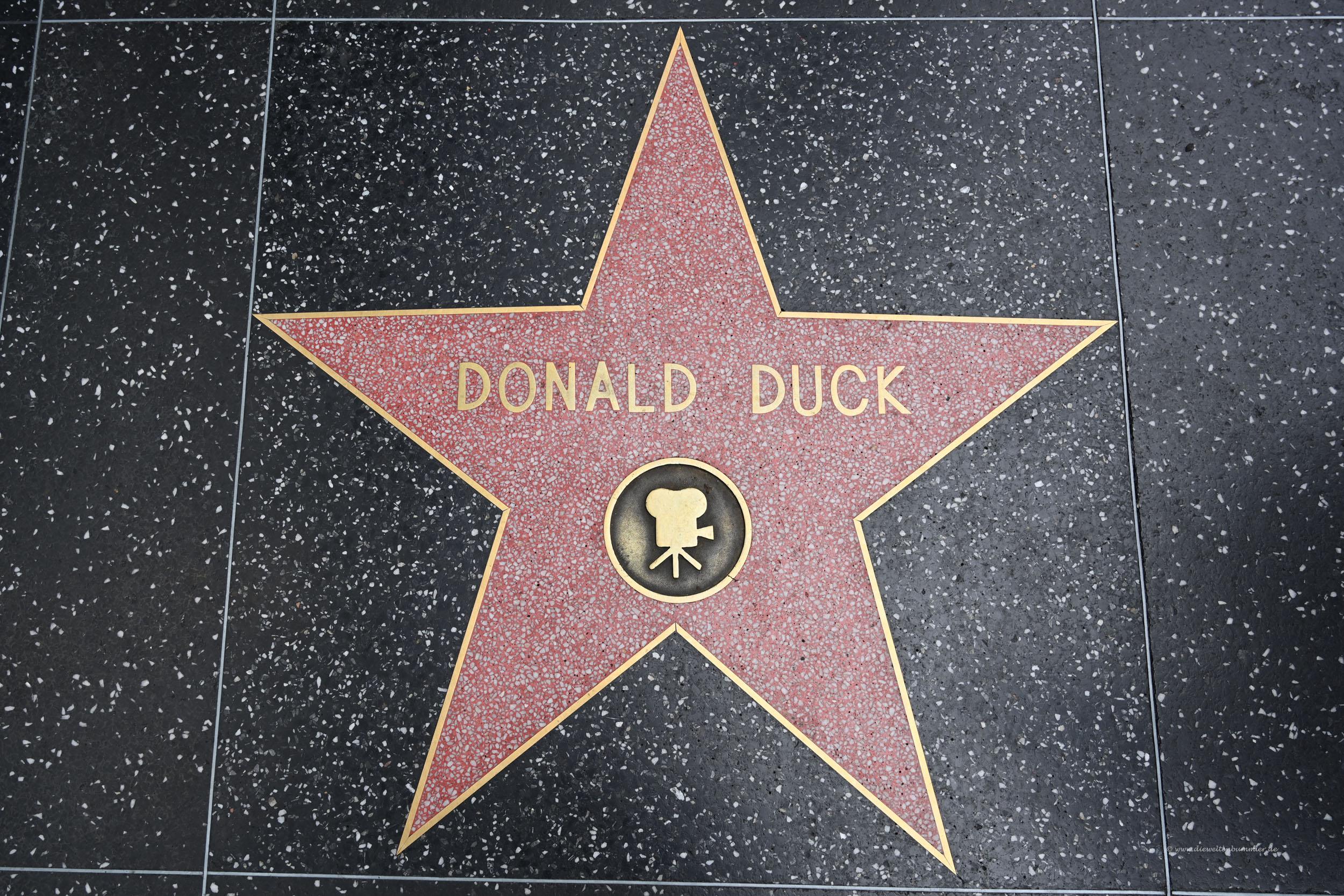 Donald Duck-Stern