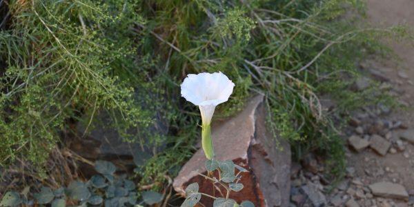 Große Blüte