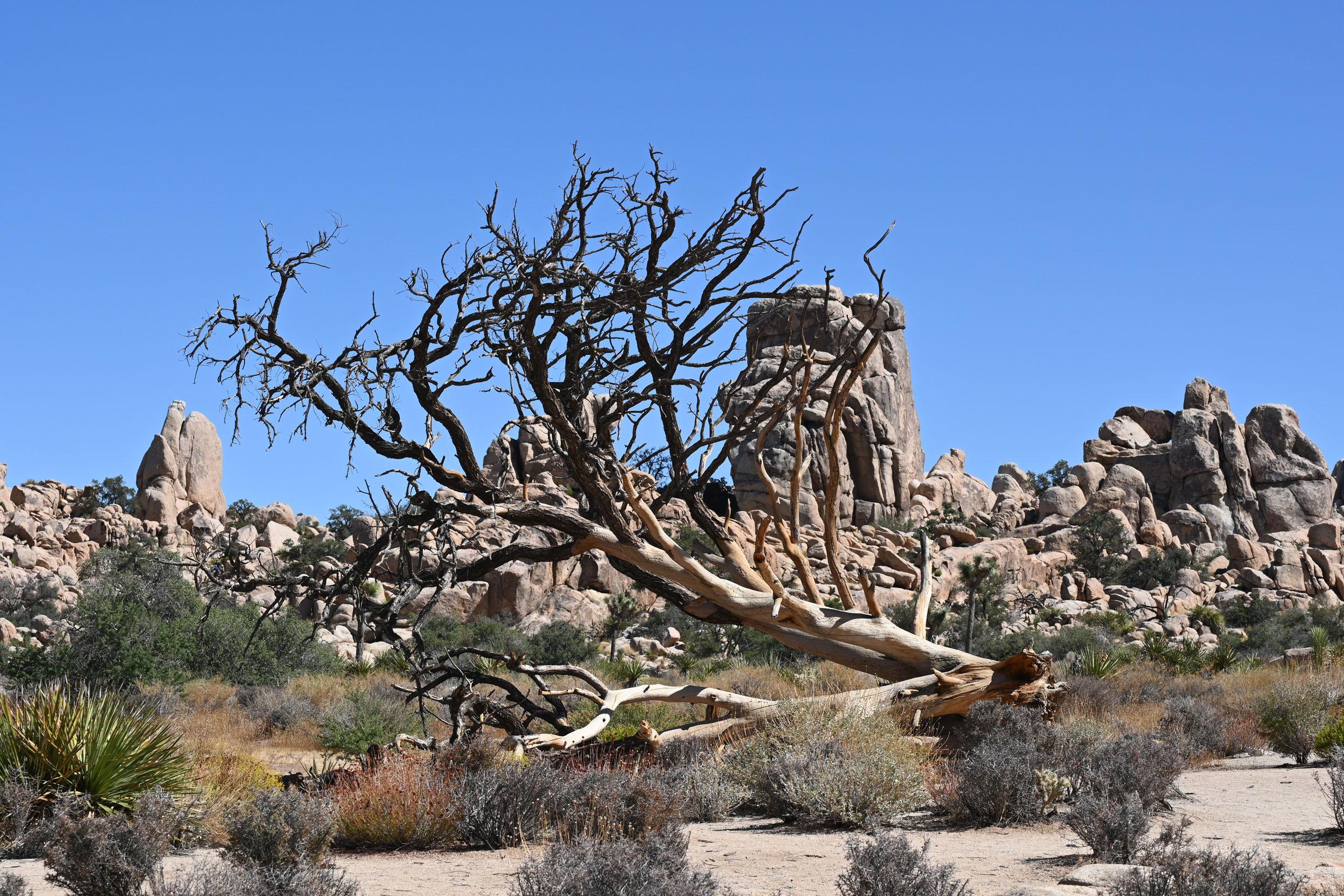 Alter Baum im Hidden Valley