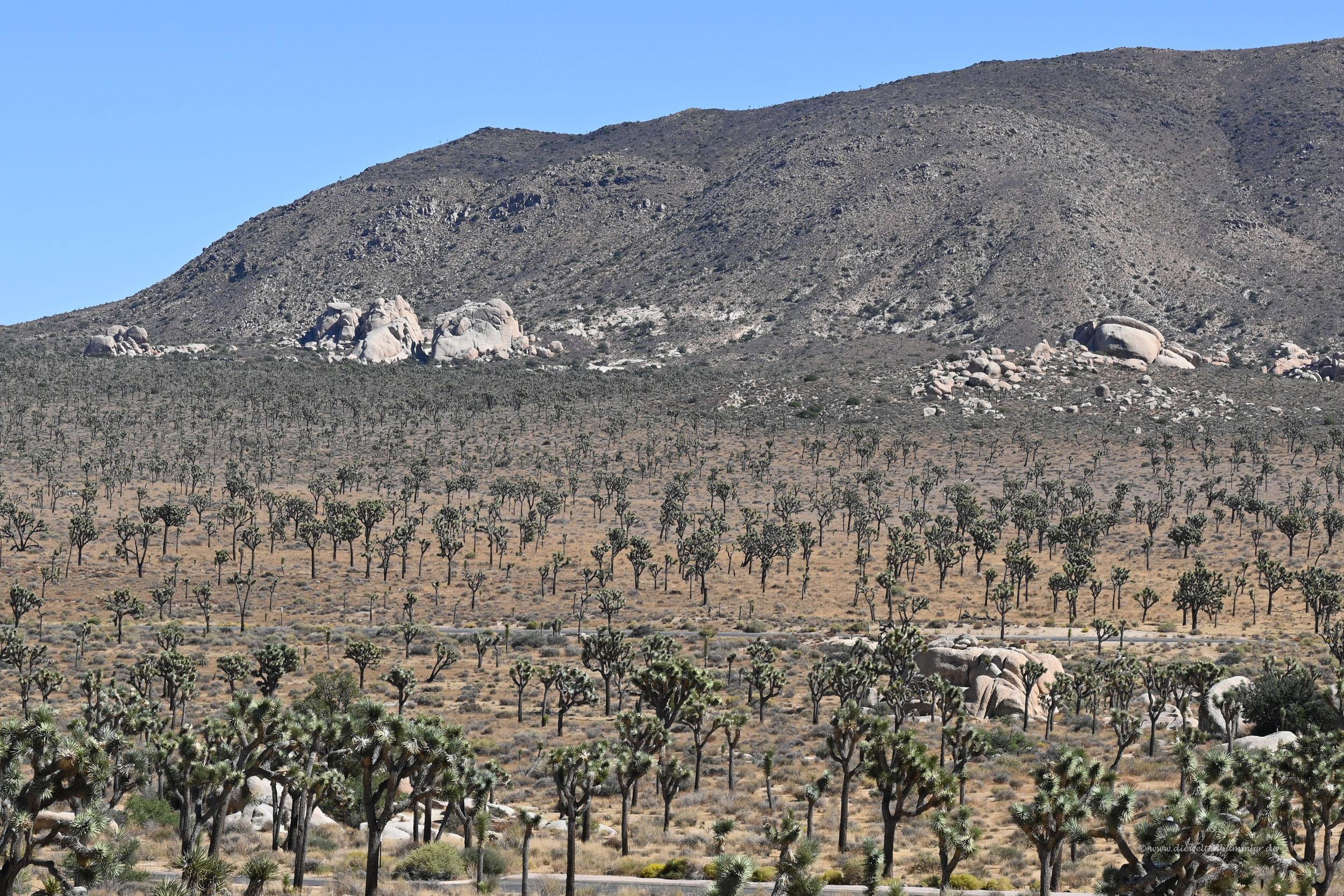 Joshua Tree-Nationalpark