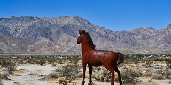 Pferd in Borrego Springs