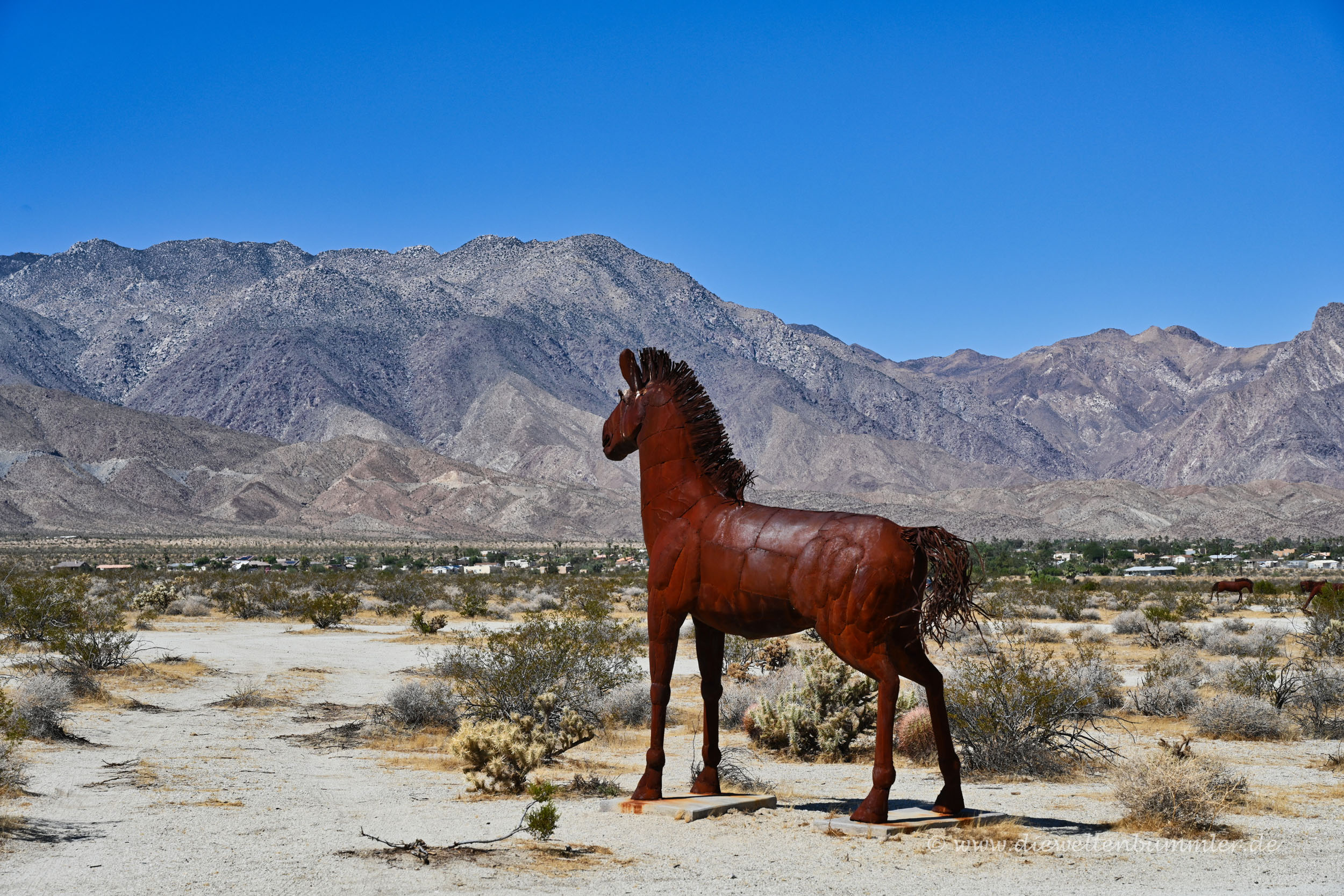 Pferd in Borrego Springs
