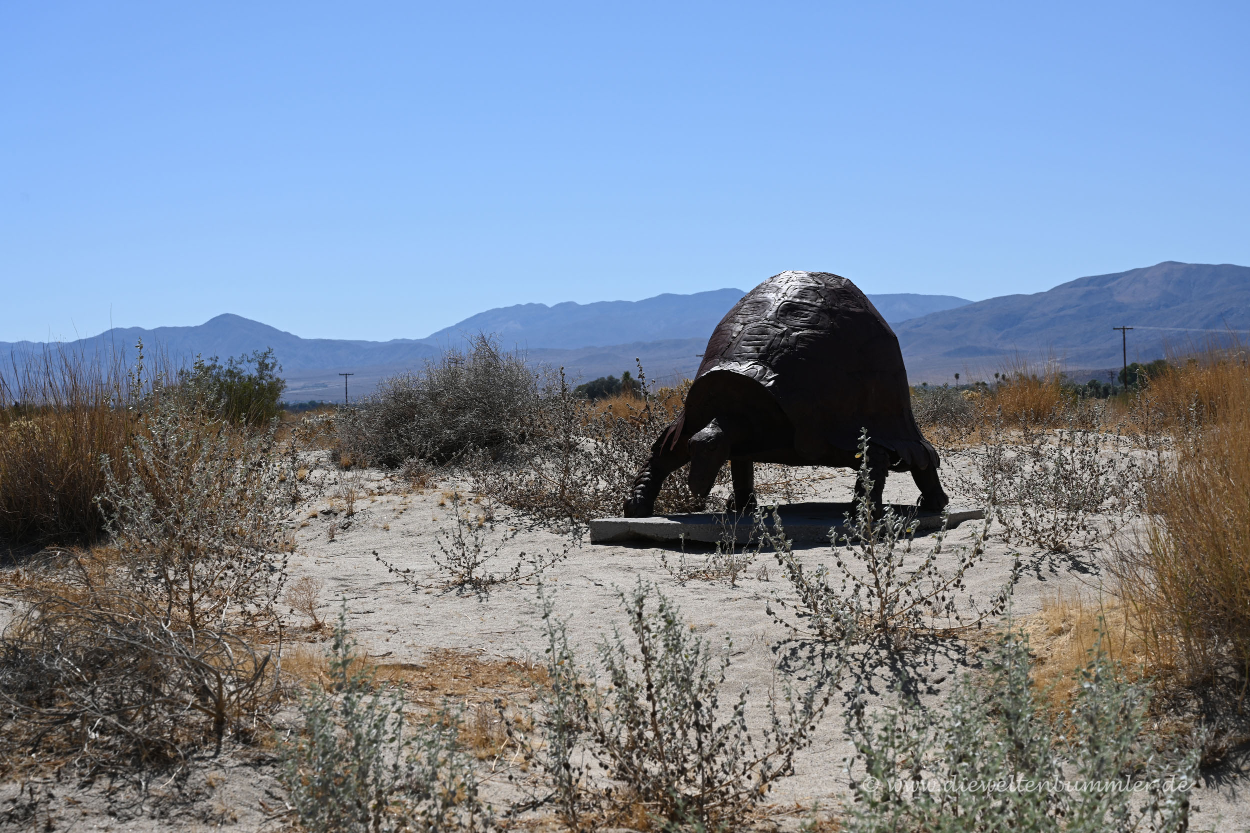 Schildkröte in der Wüste