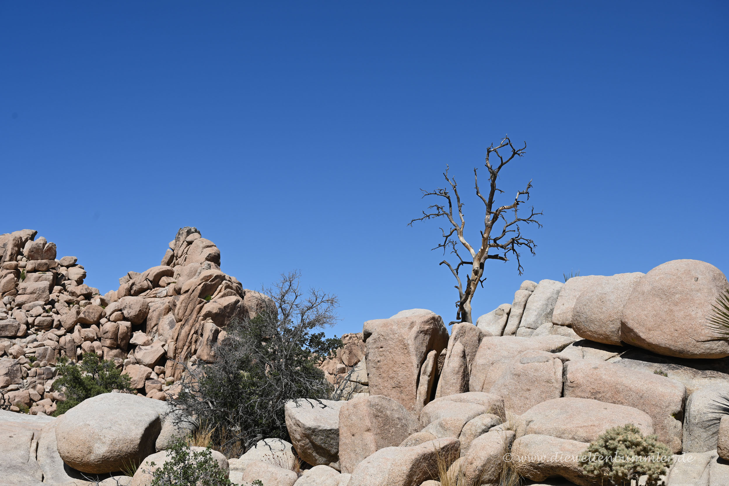 Vertrockneter Baum
