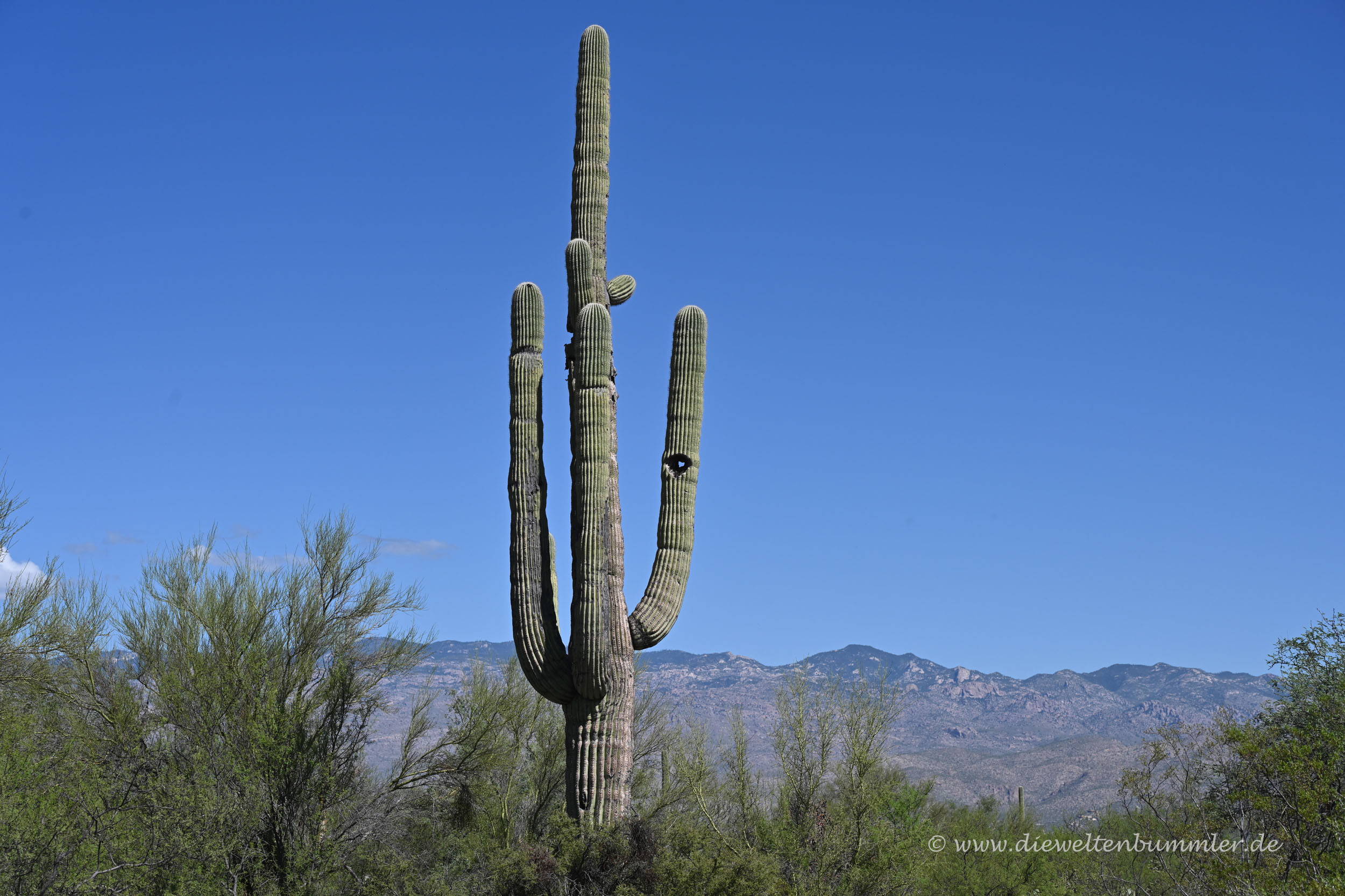 Kaktus mit Loch