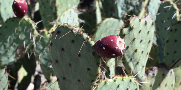 Kleinerer Kaktus
