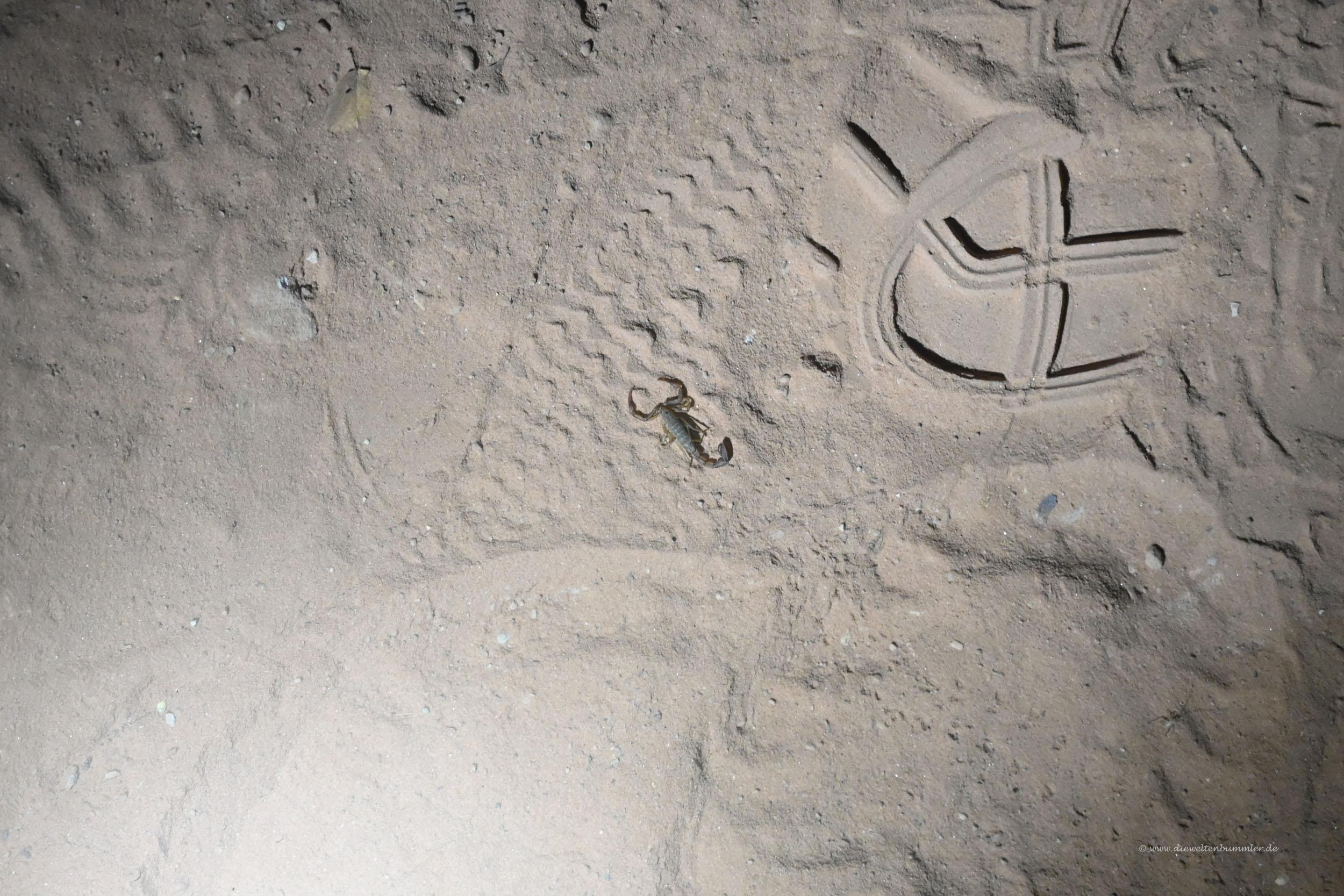 Skorpion auf dem Wanderweg