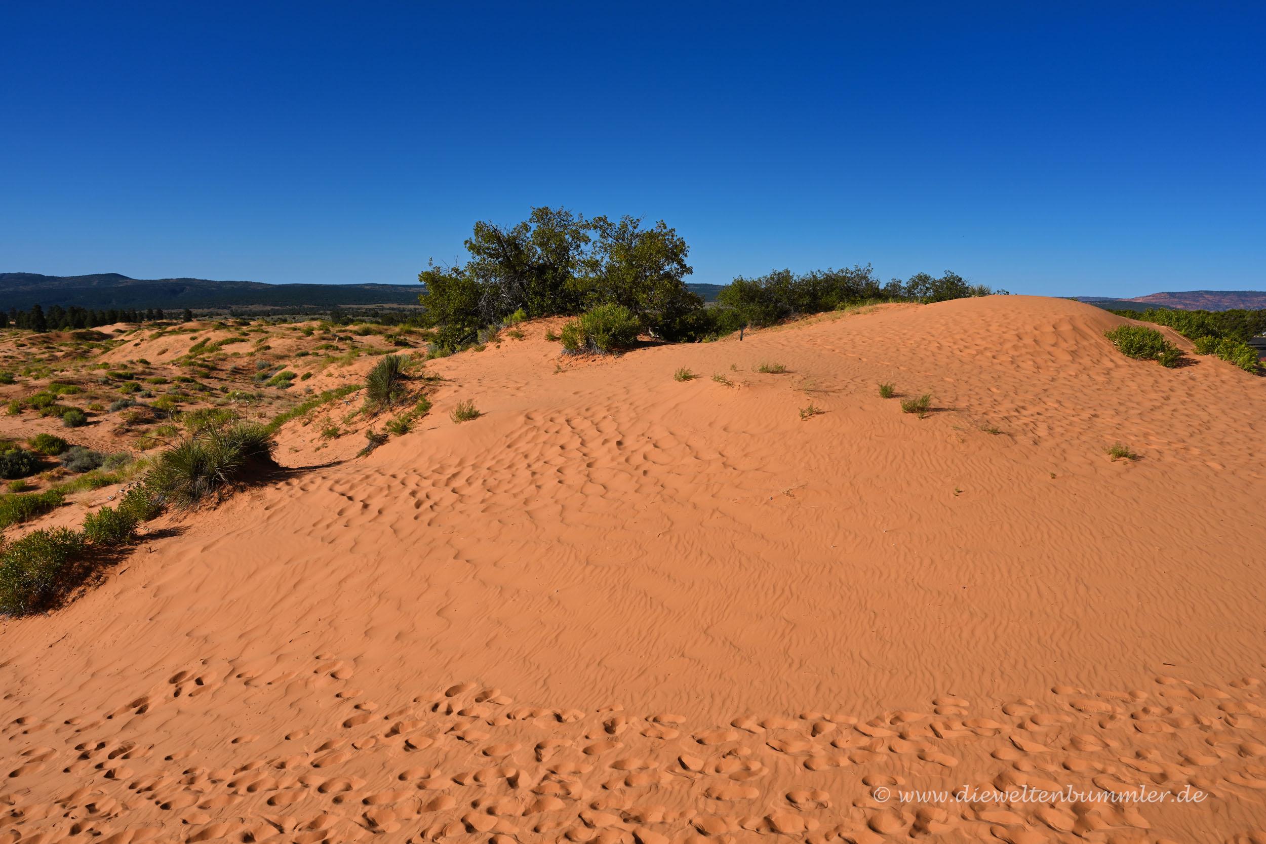 State Park mit Sanddünen