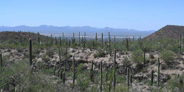 Wüste in Arizona