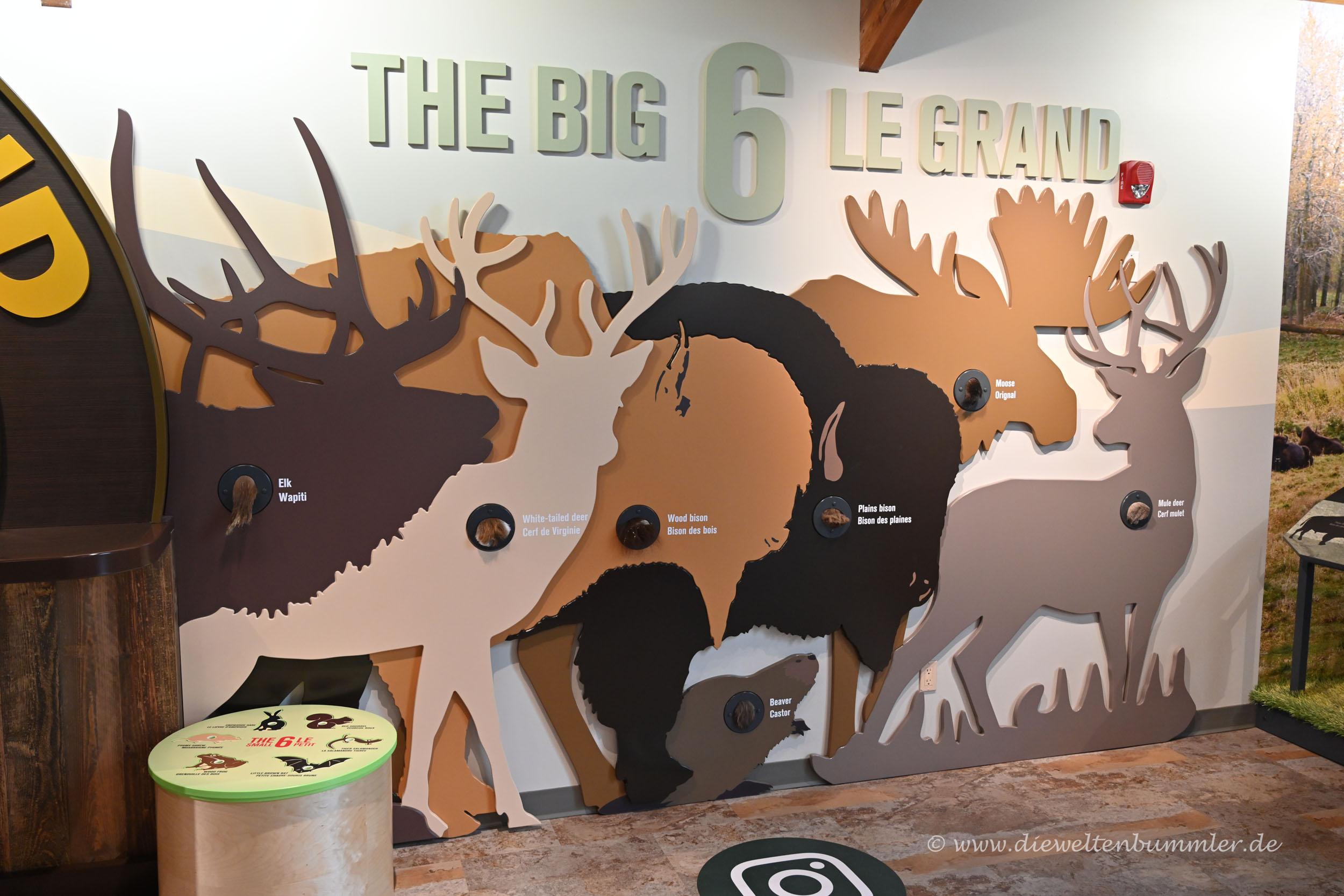 Die Big 6 im Besucherzentrum