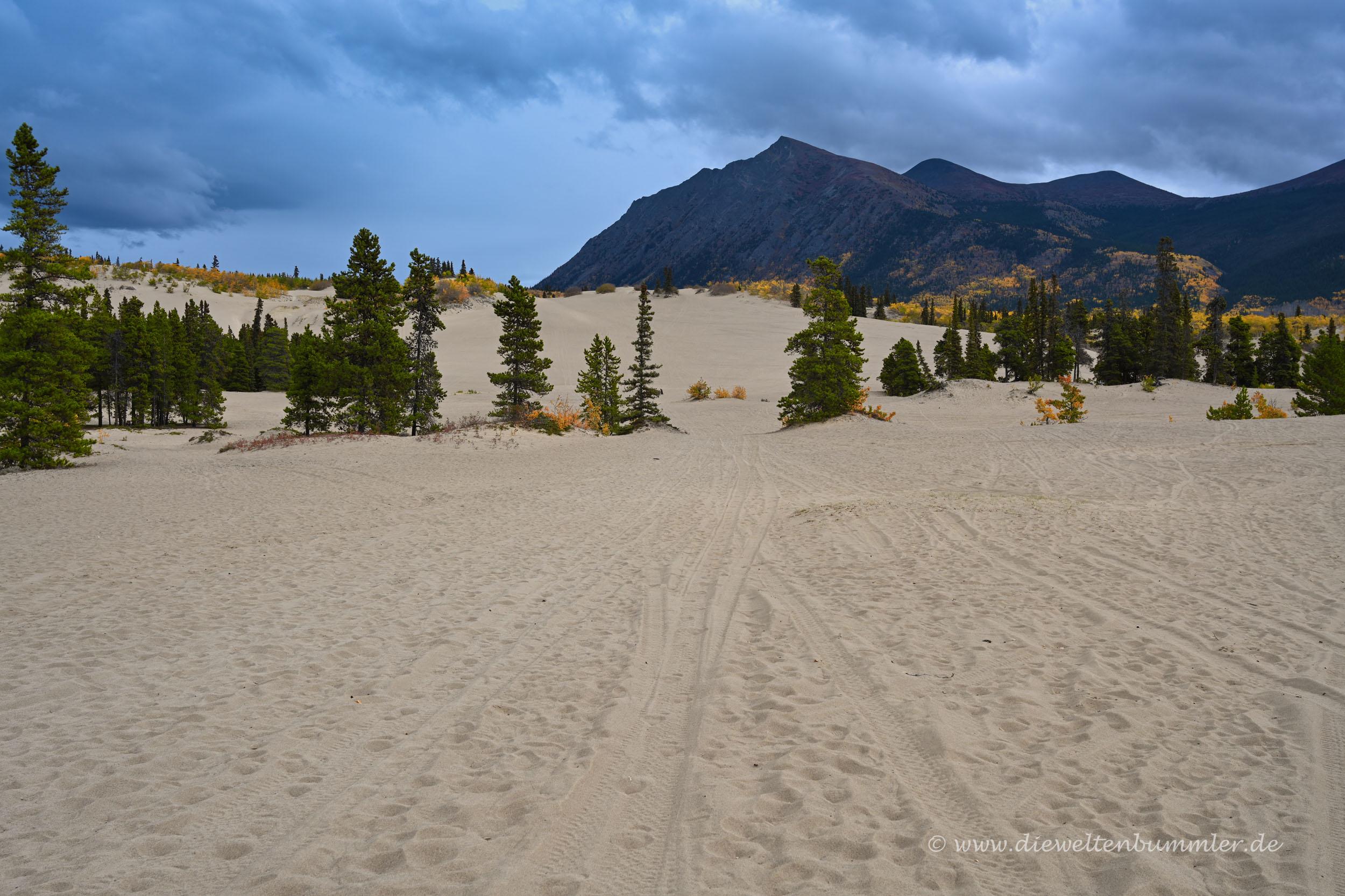 Sanddüne im Yukon