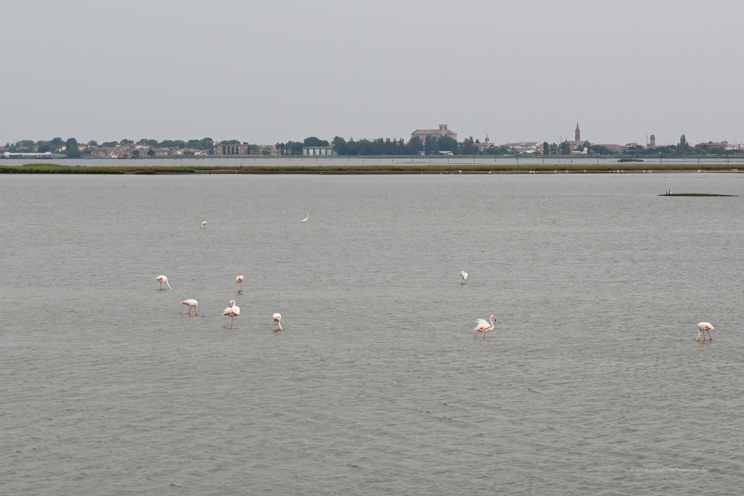 Flamingos vor Comacchio