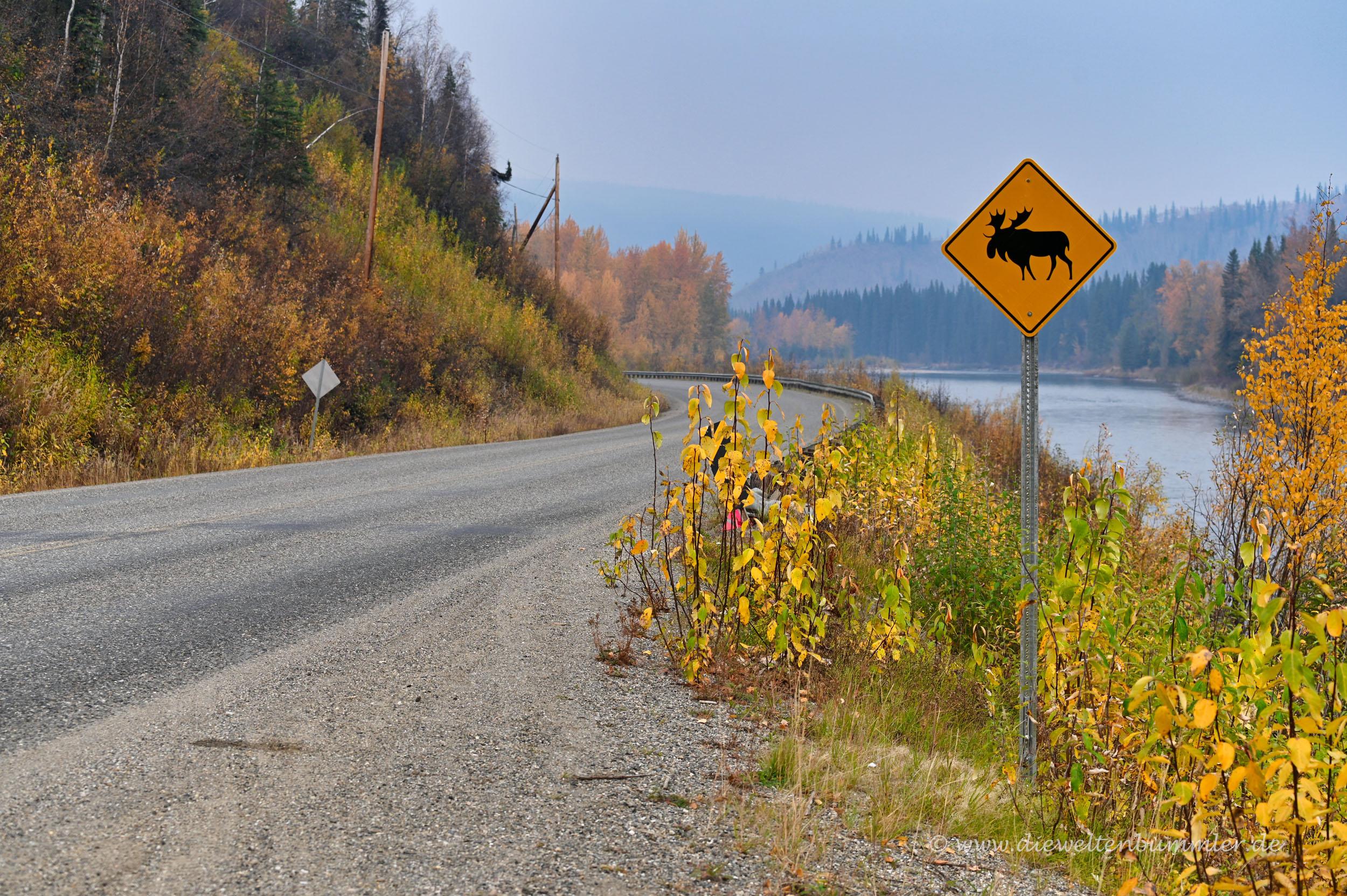 Wildtiere gibt es auf dem gesamten Highway