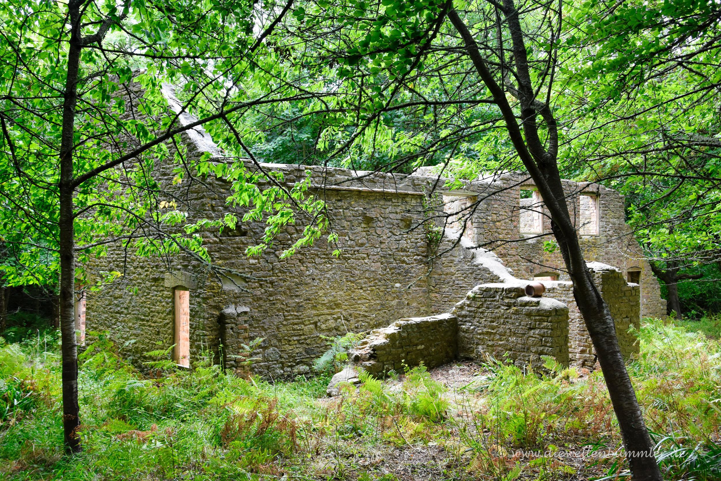 Überwucherte Ruinen