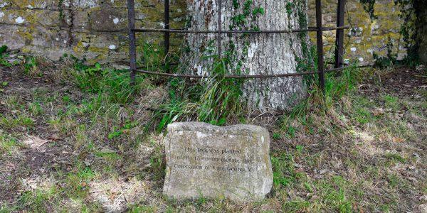 Der Baum wurde von König Georg V gepflanzt