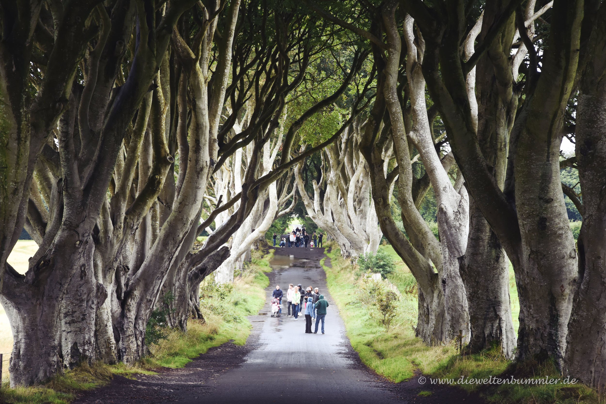 Die Allee Dark Hedges